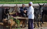 Auf dem Viehmarkt in Kashgar, dem größten in West-China.