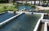 Der Wasserfall speist Becken, in denen köstliche Forellen heranwachsen.